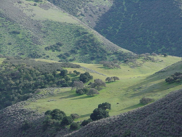 Monroe Canyon Ranch